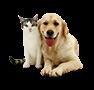 Animals/Pets